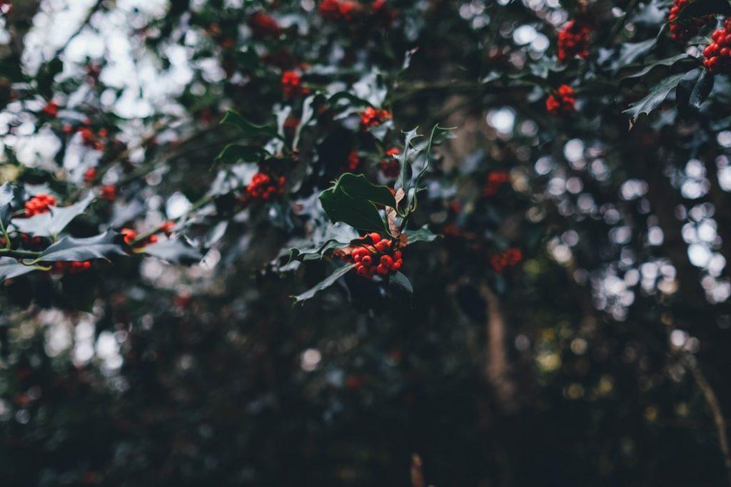 Missatge de Nadal 2020 Gestoria Luis bona foto d'arbre